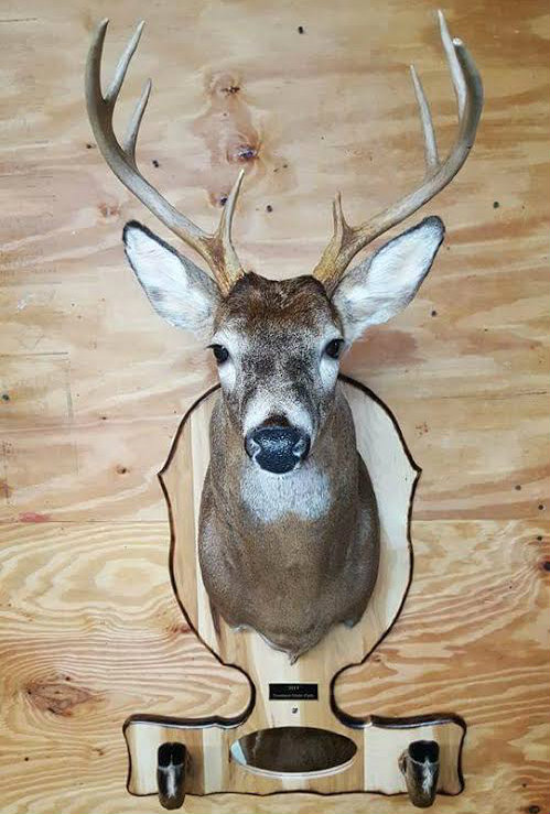 Deer Head Mount >> Custom Engraved Taxidermy Plaque Photo Gallery